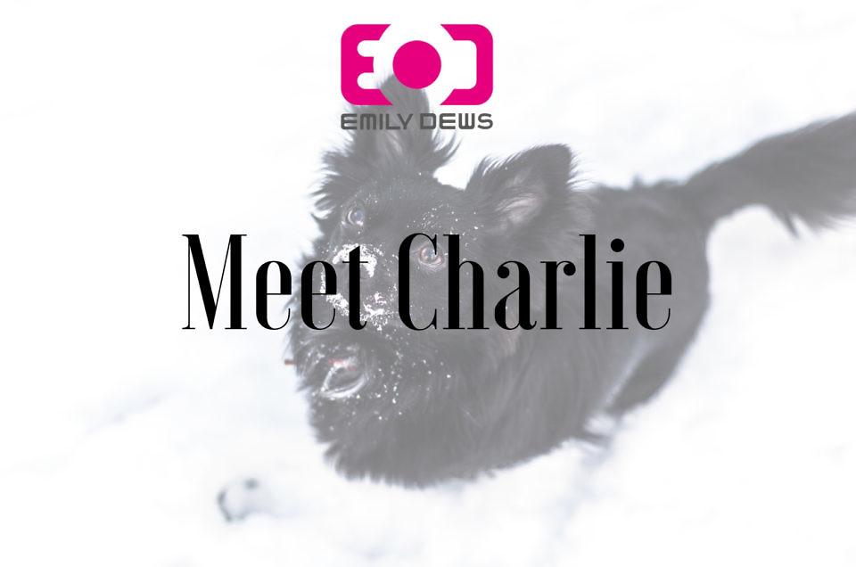 Meet Charlie